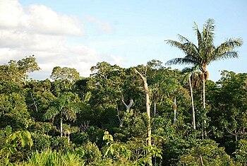 Selva Wikipedia La Enciclopedia Libre
