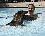 Splish, splash (10555977576).jpg
