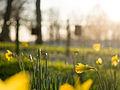 Spring in Ruskin Park (13040781273).jpg