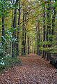 Staatsforst Rantzau - Waldweg im Herbst 03.jpg