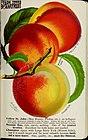 Stark fruits (1896) (20356626968).jpg