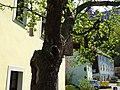 Steinplatz square and street Pirna 118972181.jpg