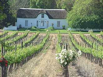 South African wine - A vineyard in Stellenbosch