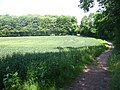 Stonesley and Harbourclose Woods, near Graveley - geograph.org.uk - 22013.jpg