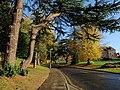 Streatham Drive - geograph.org.uk - 1039246.jpg