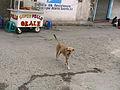 Street Dogs Guatemala.jpg