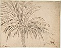 Study of a Palm Tree (recto); Mountain Landscape (verso) MET DP807958.jpg