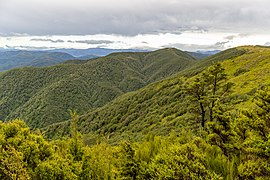 Summit Track to Mt Thomas, Mount Thomas Forest Conservation Area, Canterbury, New Zealand 01.jpg