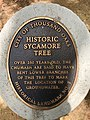 Sycamore tree thousand oaks landmark stagecoach inn newbury park.jpg