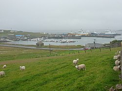 Symbister- sheep above the harbour (geograph 2757420).jpg