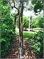 TREES (7646372010).jpg