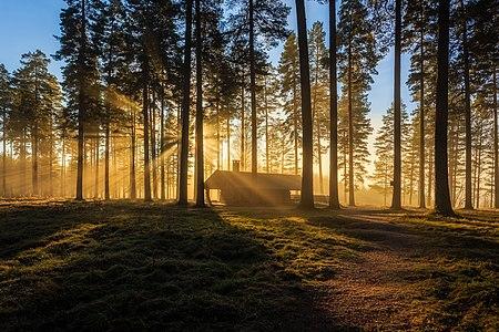 Tallmons naturreservat, Sweden