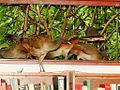 Tampering W Nature Guacharacas.jpg