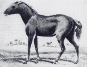 Proto-Indo-European society - Tarpan horse (1841 drawing)