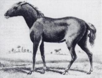 Proto-Indo-European society - Tarpan horse (1841 drawing)
