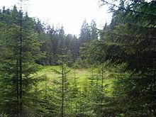 Světlá kalte moldau – wikipedia