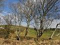 Terhillion Townland - geograph.org.uk - 1806247.jpg