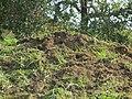 Termite hill - human influence (6849963025).jpg