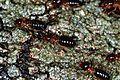 Termites (7807827156).jpg