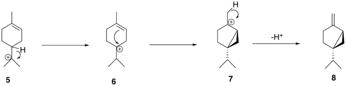The conversion of alpha-terpinyl cation to (+)-sabinene