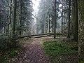 The Krogulec Forest in Zgierz.jpg