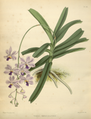 The Orchid Album-01-0146-0048.png