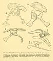 The Osteology of the Reptiles-167 dfgrfg iuh.png