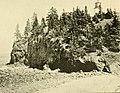 The Pine-tree coast (1891) (14592685100).jpg