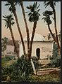 The cemetery, with chapel, Algiers, Algeria-LCCN2001697808.jpg