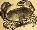 The common objects of the sea shore - including hints for an aquarium (1859) (20047584373).jpg