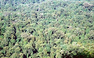 Gondwana Rainforests - Image: Toonumbar National Park Murray Scrub January 1995