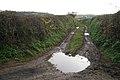 Top of a green lane to Cofford Farm ((SX9680)) - geograph.org.uk - 1623240.jpg