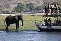 Tourists, elephants and Sedudu Island.jpg
