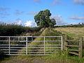 Track Near Repentancehill - geograph.org.uk - 564779.jpg