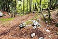 Trail Planina Goričica - Bovec.jpg