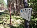 Trails in Bory Tucholskie National Park (4).jpg