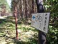 Trails in Bory Tucholskie National Park (4).jpg