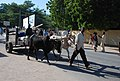 Transport dans la ville de Garoua1.jpg