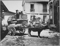 """Transportation of Army supplies by """"Caraboo"""" (Water ox cart) and rear of Signal corps quarters, Manila., ca. 1899 - NARA - 530694.tif"""
