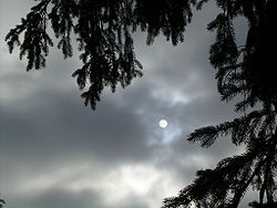Tree and sun through Stratus.JPG