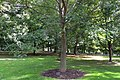 Tree planted by Carlos Menem in Rideau Hall.jpg