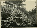 Trees and shrubs of Prospect park (1906) (14597032740).jpg