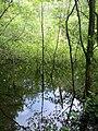 Trees in water, Yarner Wood - geograph.org.uk - 831896.jpg