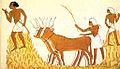 Trilla del trigo en el Antiguo Egipto.jpg