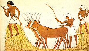 Trilla del trigo en el Antiguo Egipto.