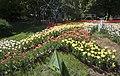 Tulips at Spivoche Pole 2018-05-05 02.jpg