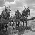 Tweede wereldoorlog, landbouw, Bestanddeelnr 900-6145.jpg