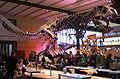 Tyranosaurus Rex 28-12-2007 15-01-16.jpg
