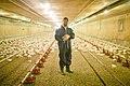 UFV - Agriculture Students Work Practicum (13987767755).jpg