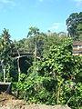 Ubud landscape3.JPG